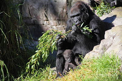 Gorilla Photograph - Kabibe The Baby Gorilla 5d27088 by Wingsdomain Art and Photography