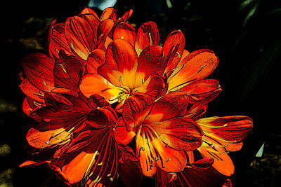 Photograph - Kafir Lily Too by Jonah Gibson