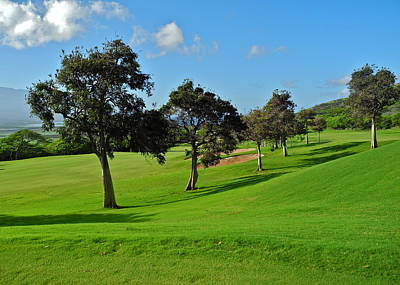 Photograph - Kahili Golf Course Trees by Kirsten Giving
