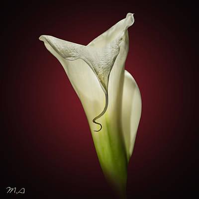 Serenity Digital Art - Cala Lily 2 by Mark Ashkenazi