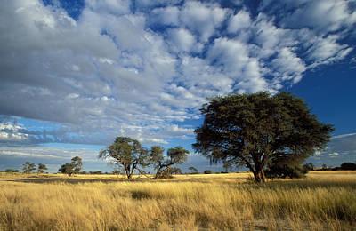 Photograph - Kalahari Scene by Nigel Dennis