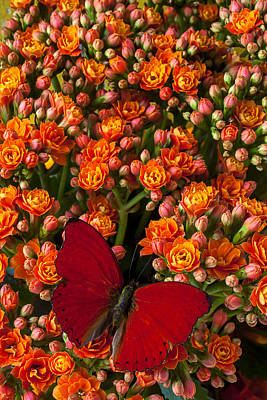 Kalanchoe Plant With Butterfly Art Print
