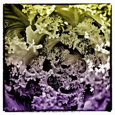 Floral Digital Art Digital Art - Kale Color II by David Patterson
