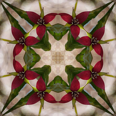 Red Trillium Photograph - Kaleidograph Nw 1313 by Judy Olson