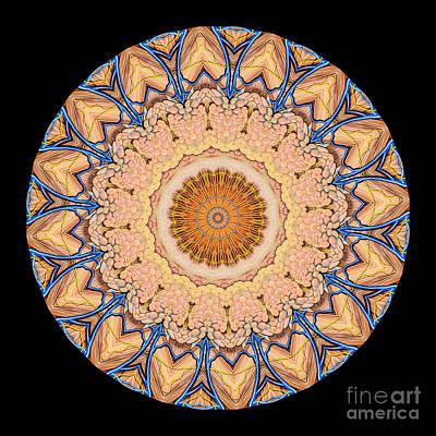 Mandala Photograph - Kaleidoscope Anatomical Illustrations Seriesi by Amy Cicconi