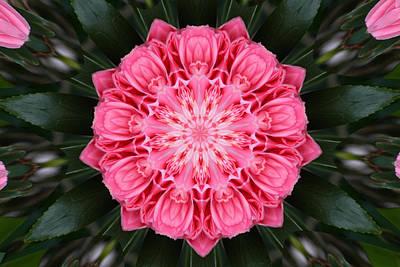 Camellias Photograph - Kaleidoscope  Camellia by Mechala  Matthews