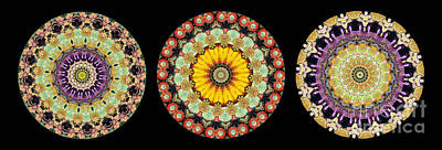 Medallion Photograph - Kaleidoscope Ernst Haeckl Inspired Sea Life Series Triptych by Amy Cicconi