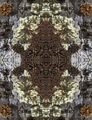 Photograph - Kaleidoscope - Lichens 2 by Andy Shomock