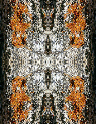 Photograph - Kaleidoscope - Lichens 7 by Andy Shomock