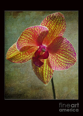Photograph - Kaleidoscope Orchid Card by Dawn Gari