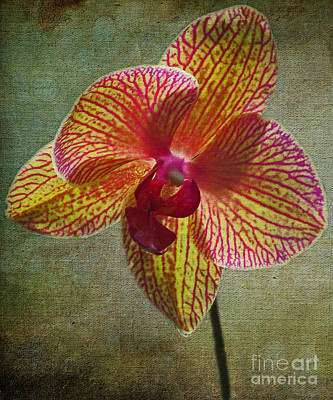 Photograph - Kaleidoscope Orchid by Dawn Gari