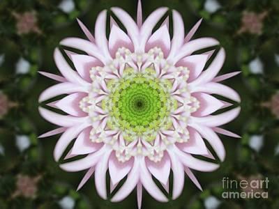 Kaleidoscope Pink Daisy Art Print by Carol Groenen