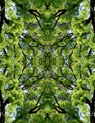 Photograph - Kaleidoscope - Trees 2 by Andy Shomock