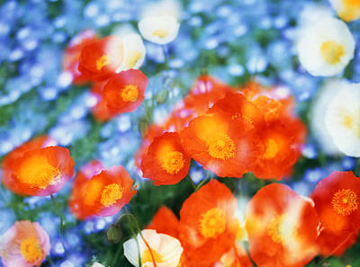 Kaleidoscopic Photograph - Kaleidoscopic Flowers In Blues, Orange by Panoramic Images
