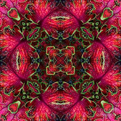 Pink Photograph - Kaleidscope Made From Image Of Coleus Plant by Amy Cicconi