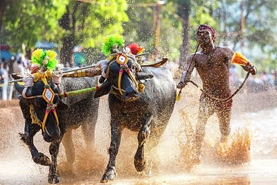 Water Buffalo Wall Art - Photograph - Kambala, Traditional Buffalo Racing by Peter Adams