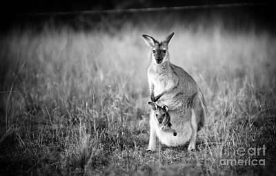 Kangaroo Photograph - Kangaroo And Joey Black And White by Tim Hester