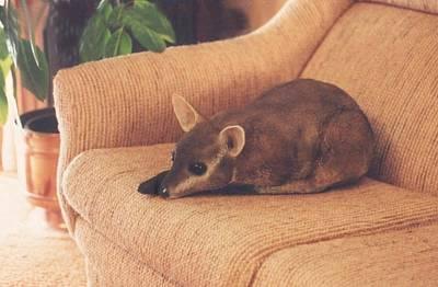 Kangaroo Buddy Sculpture Art Print by Arlene Delahenty