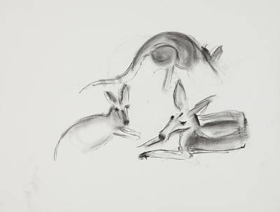 Kangaroo Drawing - Kangaroo Charcoal Study #2 by Greg Kopriva