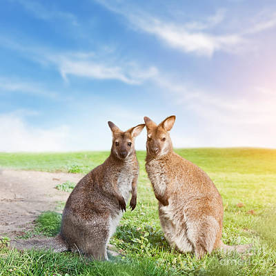 Ears Photograph - Kangaroo Couple Australia by Michal Bednarek