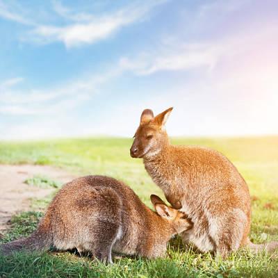 Ear Photograph - Kangaroo Feeding Suckling Australia by Michal Bednarek