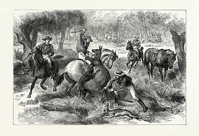 Kangaroo Drawing - Kangaroo-hunting In Australia by Australian School