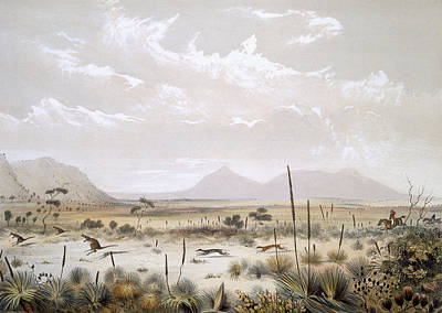 Vegetation Drawing - Kangaroo Hunting Near Port Lincoln by George French Angas
