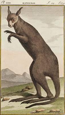 18th Century Photograph - Kangaroo by Paul D Stewart