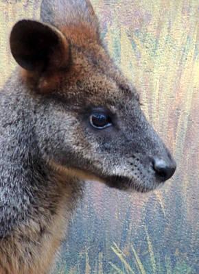 Kangaroo Potrait Original