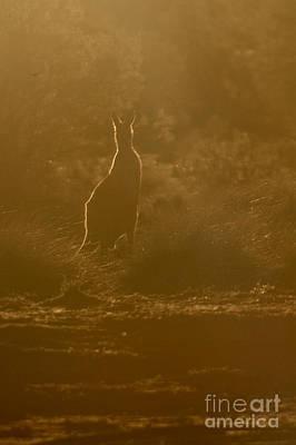 Photograph - Kangaroo Silhouette by Gabor Pozsgai