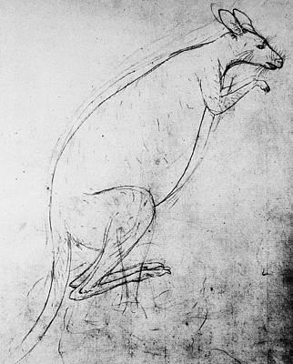 Kangaroo Wall Art - Photograph - Kangaroo Sketch by Science Photo Library