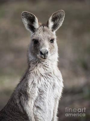 Photograph - Kangaroo by Steven Ralser