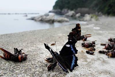 Insect Photograph - Kaniska Canace by Yoshinori ikeda
