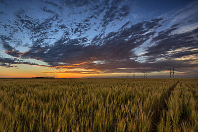 Wheat Field Photograph - Kansas Color by Thomas Zimmerman