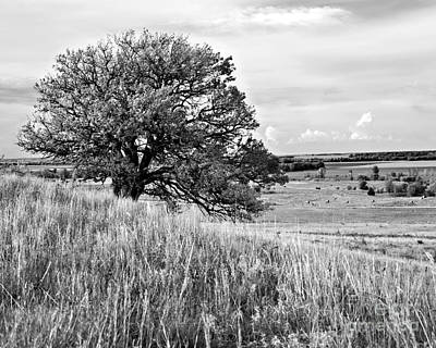 Photograph - Kansas One Tree Hill In Black And White by Lee Craig