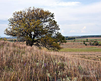 Photograph - Kansas One Tree Hill by Lee Craig