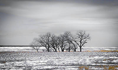 Photograph - Kansas Snow by Shey Stitt