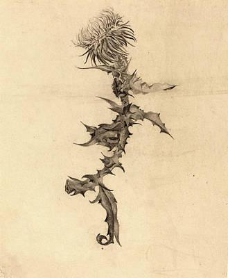 Thistle Drawing - Karel Vitezslav Masek Czech, 1865-1927 by Litz Collection