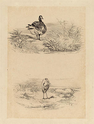Herons Drawing - Karl Bodmer, Oie, Heron, Swiss, 1809 - 1893 by Quint Lox