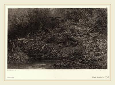 L. T Drawing - Karl Bodmer, Renard à Laffût, Swiss, 1809-1893 by Litz Collection