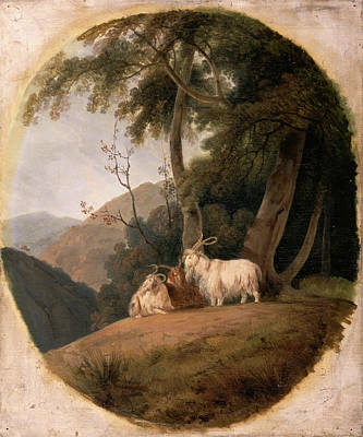 Mountain Goat Art Painting - Kashmir Goats, William Daniell, 1769-1837 by Litz Collection