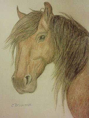 Drawing - Kathy's Horse by Christy Saunders Church