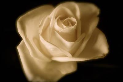 Katie's White Rose Art Print