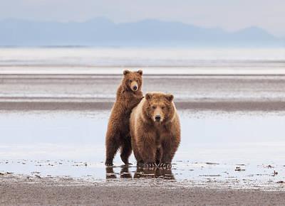 Photograph - Katmai Brown Bear Mom And Cub by June Jacobsen