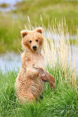 Photograph - Katmai Cub by Bill Singleton