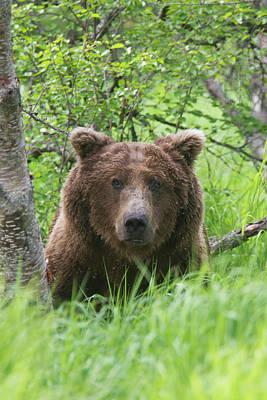 Brown Bear Photograph - Katmai National Park, Alaska, A Brown by Hugh Rose