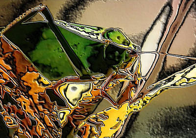 Photograph - Katydid In Stone by Belinda Lee