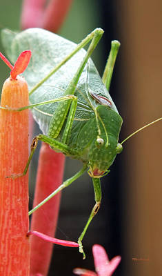Photograph - Katydid On Firesticks 3 by Duane McCullough