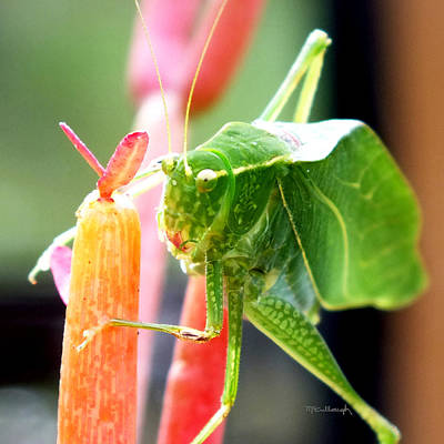 Photograph - Katydid On Firesticks 4 by Duane McCullough