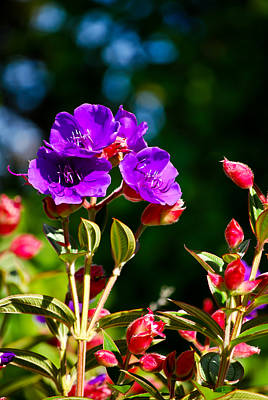 Photograph - Kauai Purples And Reds by Christi Kraft